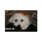 SOPHIE SHELTERED RECTANGLE MAGNET (10 PACK)