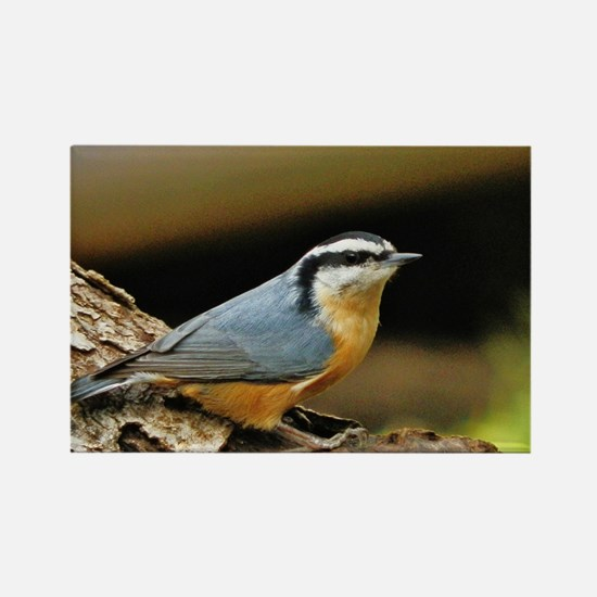 """NUTHATCH POSE"" Magnets"
