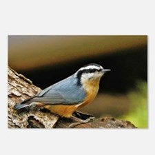 """NUTHATCH POSE"" Postcards (Package of 8)"