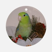 Male Lucida Pacific Parrotlet Ornament
