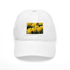Daffodil flowers in bloom in garden Baseball Cap