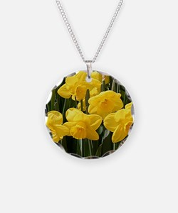 Daffodil flowers in bloom in Necklace