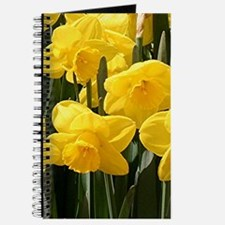 Daffodil flowers in bloom in garden Journal