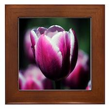 Purple Beauty Framed Tile