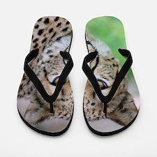 Cheetah_2014_0901 Flip Flops