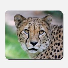 Cheetah_2014_0901 Mousepad