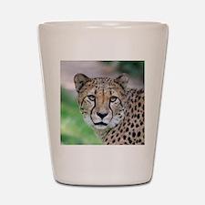 Cheetah_2014_0901 Shot Glass