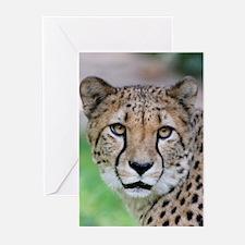 Cheetah_2014_0901 Greeting Cards