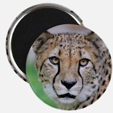 Cheetah_2014_0901 Magnets