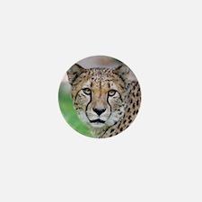 Cheetah_2014_0901 Mini Button