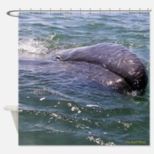 Baby Gray Whale 3 Shower Curtain