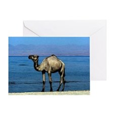 Camel On The Beach Watercolor Greeting Cards