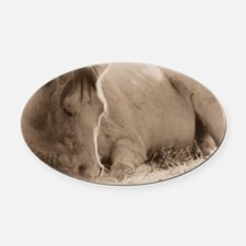 Snoozing Oval Car Magnet