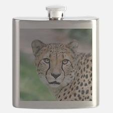 Cheetah_2014_0901 Flask