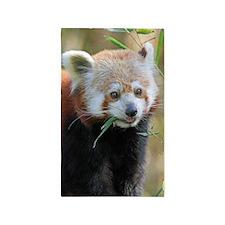 Red Panda 004 Area Rug