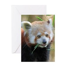 Red Panda 004 Greeting Cards