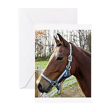 Unique Morgan horse Greeting Card