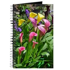 Colorful calla lilies in bloom Journal