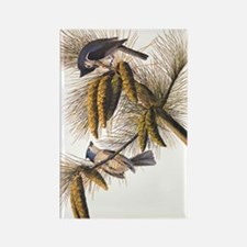 Audubon Crested Titmouse Magnets