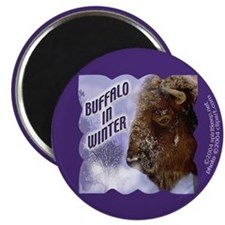Buffalo in Winter Magnet
