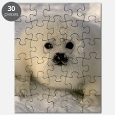 Baby Seal Puzzle