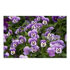 Pansy Postcards (Package of 8)