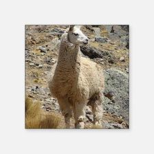 "Llama Sentinal Square Sticker 3"" x 3"""