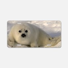 Baby Seal Aluminum License Plate