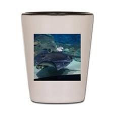 Stingray Shot Glass