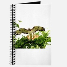 Texas Red Tail Hawk Journal