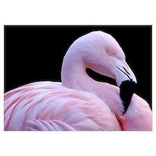 Pink Flamingo Invitations