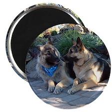 Shiloh Shepherds Sisters Magnet