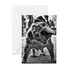 Dudley English Bulldog Greeting Cards