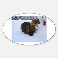 norwegian forest cat in snow Decal