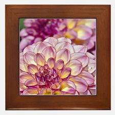 Beautiful pink dahlia flowers Framed Tile