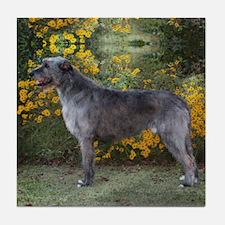 Handsome Irish Wolfhound Square Tile Coaster