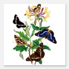 "BUTTERFLIES AND HONEYSUC Square Car Magnet 3"" x 3"""
