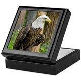 Bald eagle Square Keepsake Boxes
