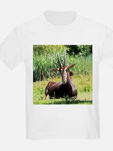 Sable_Antelope_2014_1101 T-Shirt