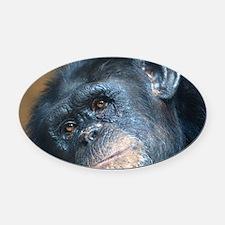 Chimpanzee 0115 Oval Car Magnet