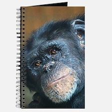 Chimpanzee 0115 Journal
