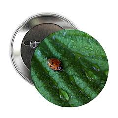 Leaf 2.25
