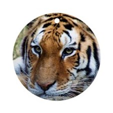 Tiger's close up Ornament (Round)