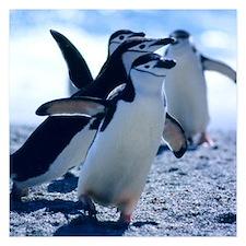 Cute Penguins Invitations