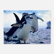 Cute Penguins 5'x7'Area Rug