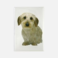 White Wire Haired Dachshund Rectangle Magnet