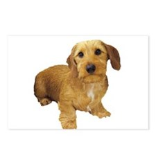 Red Wire Haired Dachshund Postcards (Package of 8