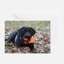 Fall Fetch Greeting Cards