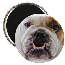 Funny Bulldogs Magnet