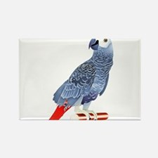 African Grey Parrot Magnets